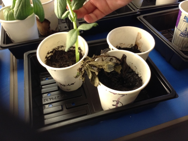 plant investigation 2