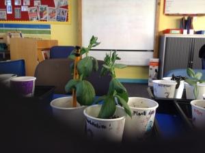 Plant investigation 1